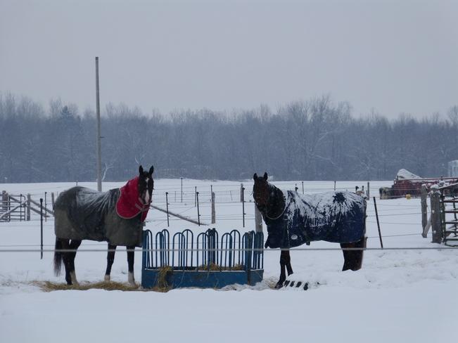 Keeping warm! Casselman, Ontario Canada
