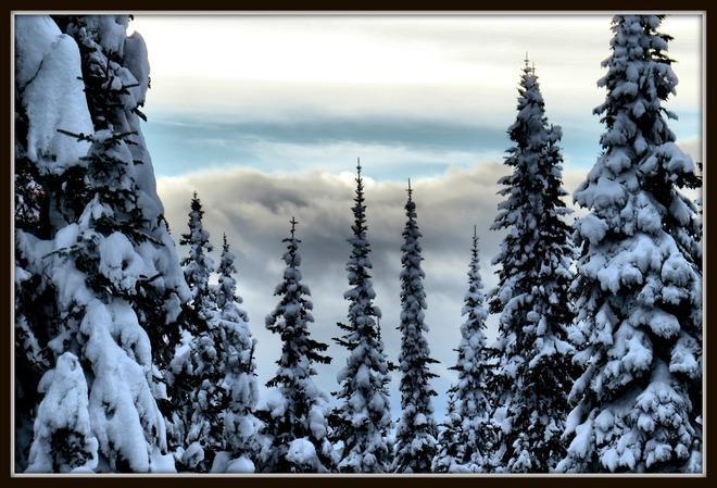 Sovereign Lake Nordic Center Scenery Vernon, British Columbia Canada