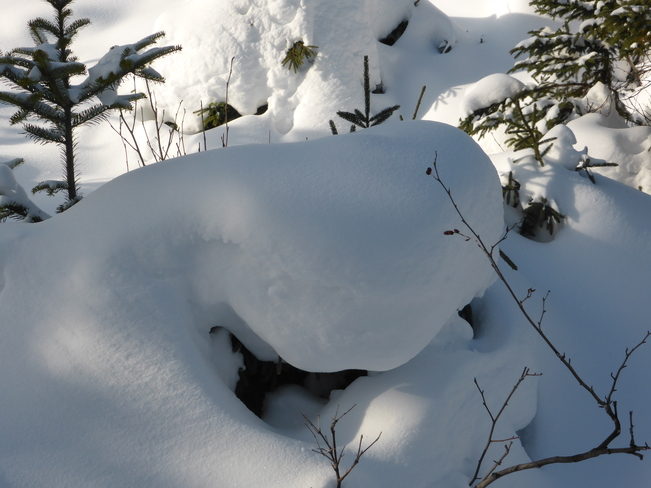 Snow Blanket Birchy Bay, Newfoundland and Labrador Canada