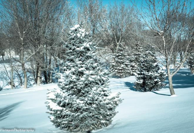 Snowy January Chatham, Ontario Canada