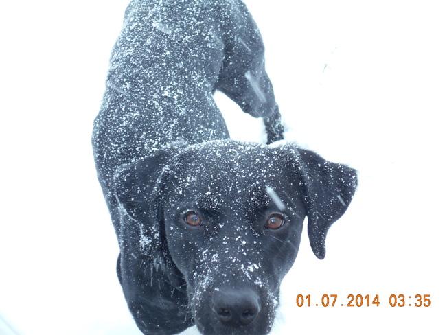 Snow Dog Owen Sound, Ontario Canada