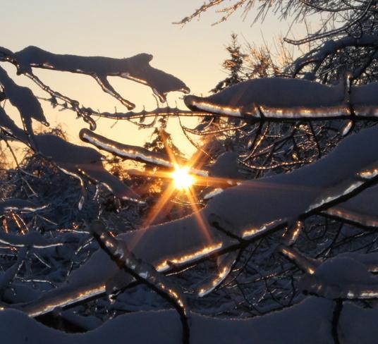 Ice glazed Trees