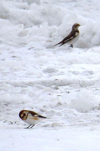 On the ice at Gull Island Brighton, Ontario Canada