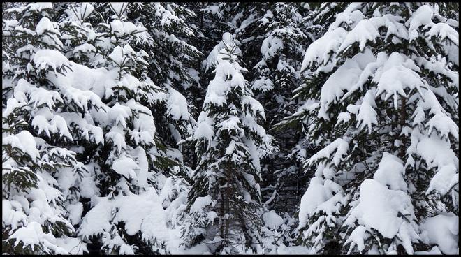 Sheriff Creek, red trail small pine. Elliot Lake, Ontario Canada
