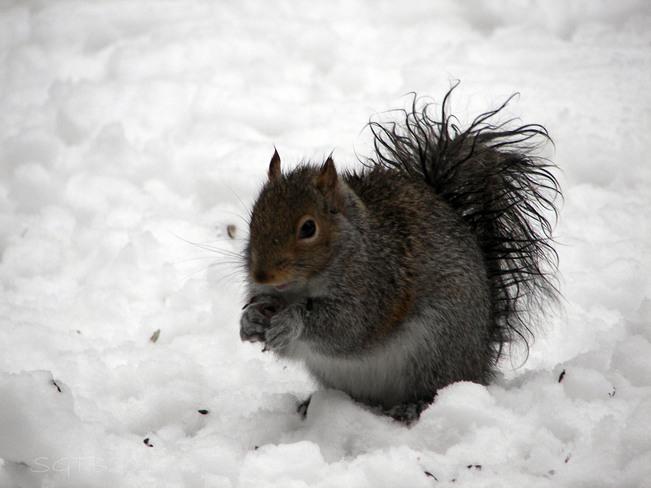 We Squirrel Barrie, Ontario Canada