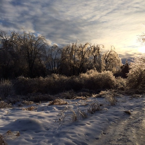 Ice storm creates beauty Courtice, Ontario Canada