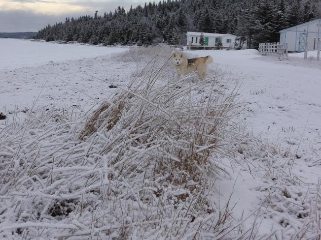 Morning Walk Birchy Bay, Newfoundland and Labrador Canada