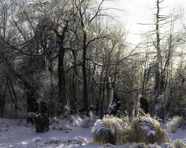 Winter fairytale Mississauga, Ontario Canada