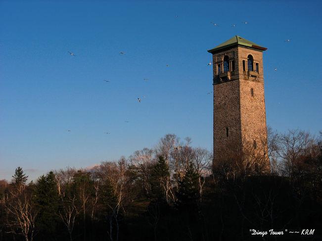 DINGO TOWER HALIFAX N.S. Halifax, Nova Scotia Canada