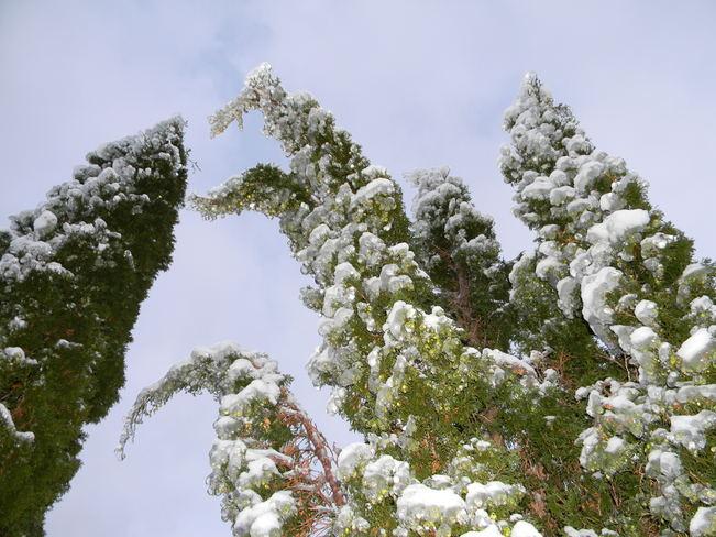ice storm Colborne, Ontario Canada