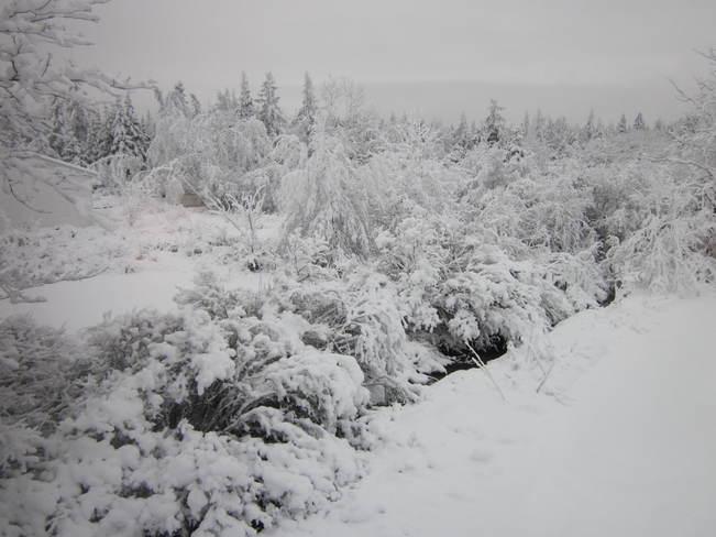 snowfall Halifax, Nova Scotia Canada