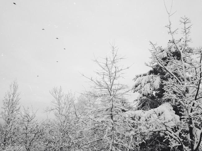 waking up in a snow globe Halifax, Nova Scotia Canada