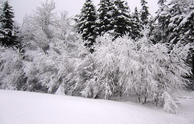 Beautiful Fresh Snow Lower Sackville, Nova Scotia Canada