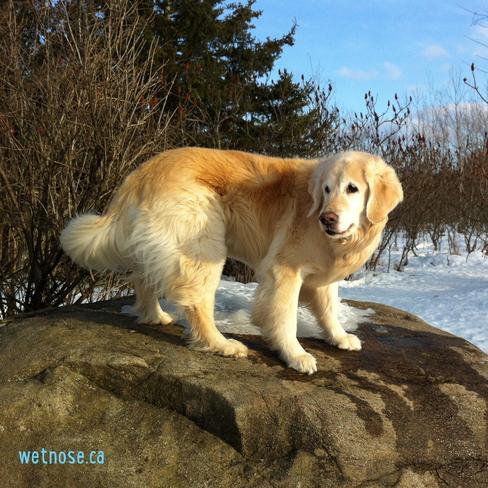Nellie on the big rock Stittsville, Ontario Canada