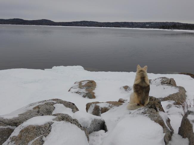 Watching Birchy Bay, Newfoundland and Labrador Canada