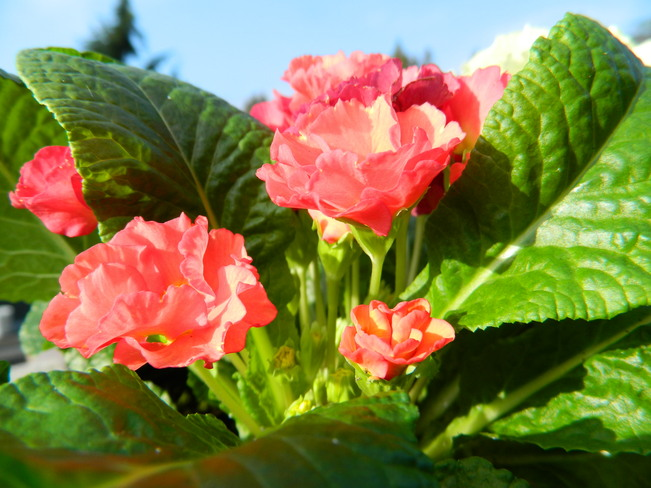 signs of spring Surrey, British Columbia Canada