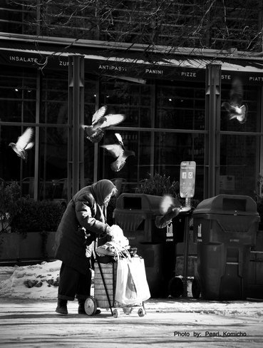 Pigeons Friend Toronto, Ontario Canada
