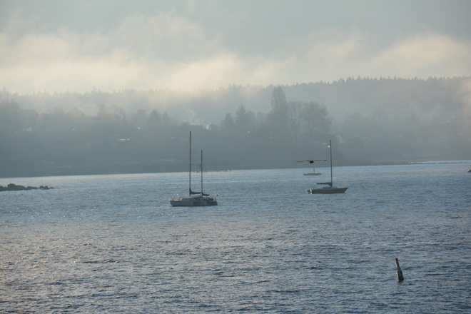 Fog shots!!! Vancouver, British Columbia Canada