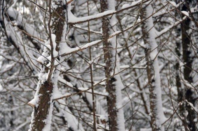 Snow in the bush Erin, Ontario Canada