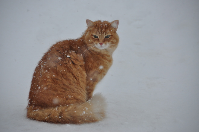 Pumpkin in the snow Acton, Ontario Canada