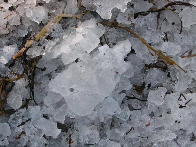 Mosaic Ice Chester, Nova Scotia Canada