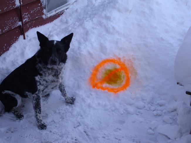 Don't eat yellow snow Brantford, Ontario Canada
