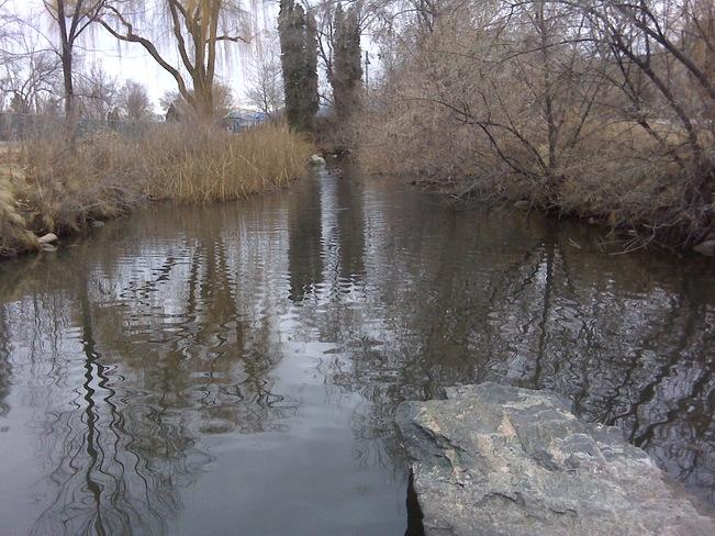 No ice on the duck pond ! Penticton, British Columbia Canada