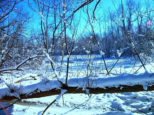 Arctic North Ridge, Ontario Canada