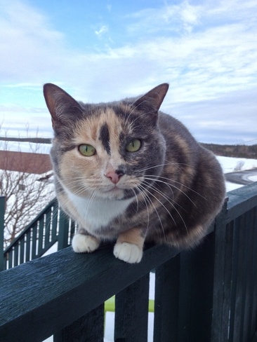 Colorful Cat Birchy Bay, Newfoundland and Labrador Canada