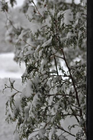 Heavy snowfall warning Seaforth, Ontario Canada