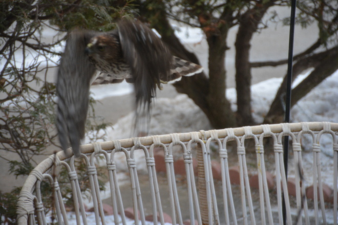 My Floppy Wings St. Catharines, Ontario Canada