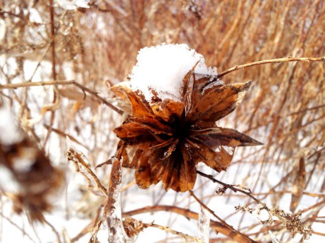Snow Cap n Ice Dressing Etobicoke, Ontario Canada