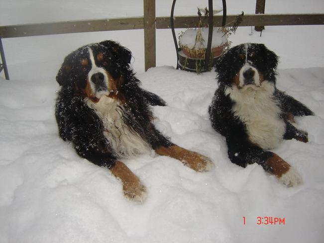 Remington and Quincy love the snow! Brighton, Ontario Canada