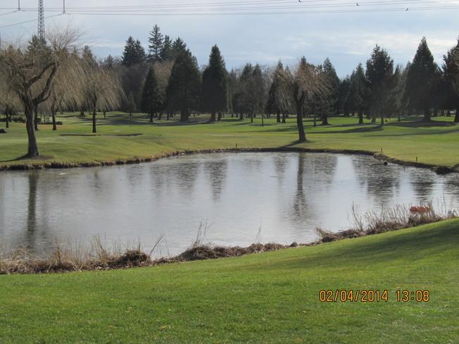 Cold but beautiful Surrey, British Columbia Canada