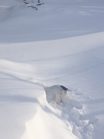 Dog Days of Winter Hockley, Ontario Canada