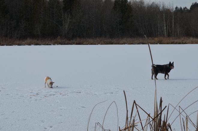 "frozen lake ""Very safe"" Nanaimo, British Columbia Canada"