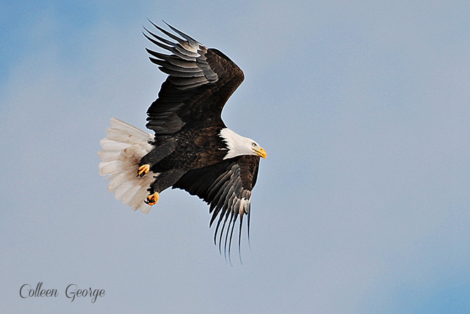 Majesty on Wings Centreville, Nova Scotia Canada
