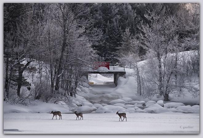 Ice crossing Magnetawan, Ontario Canada