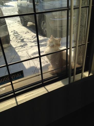 Stray cat at the office, peeking inside :) Saint-Hubert, Quebec Canada