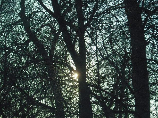 Afternoon sun peaking through the trees Winnipeg, Manitoba Canada