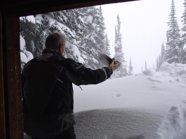 Feeding the Wiskey Jacks Kaslo, British Columbia Canada