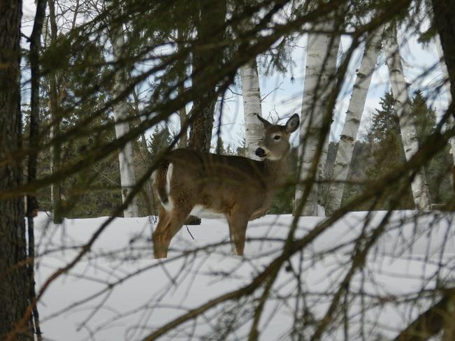 Posing Bummers' Roost, Ontario Canada