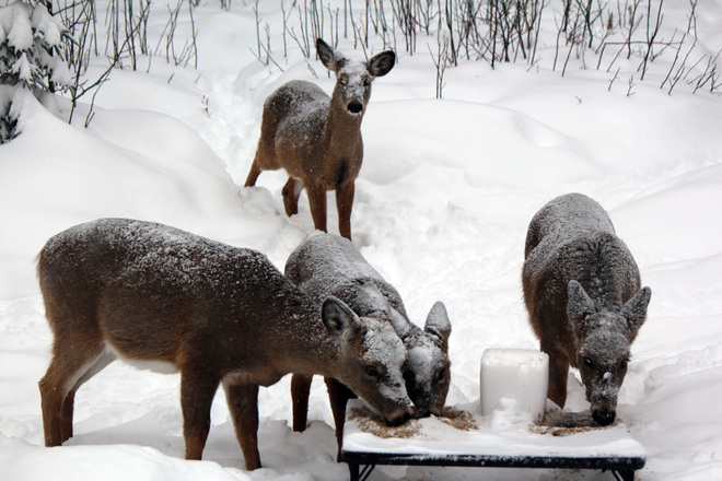 Enough Snow Oxbow, New Brunswick Canada