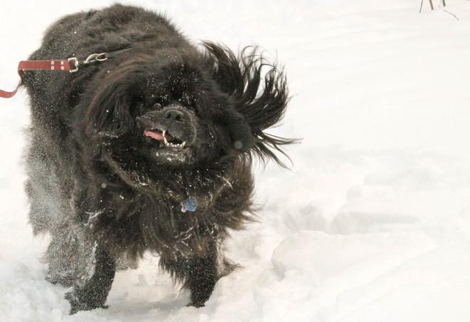Tillie in mid shake! Kingston, Ontario Canada