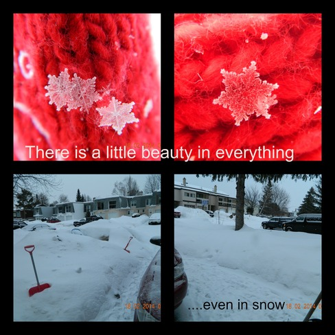 Beautiful snowflakes Bells Corners, Ontario Canada