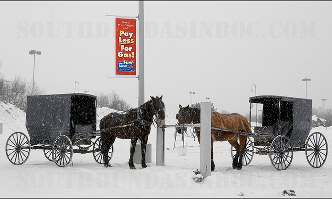 Amish taxis . . . Prescott, Ontario Canada