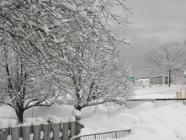 snow Saint John, New Brunswick Canada