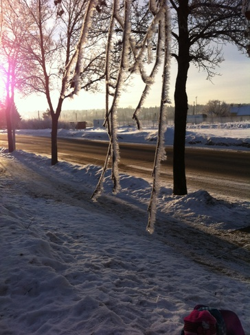 the frosting beauty St. Albert, Alberta Canada