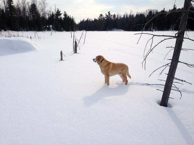A Walk on the Marsh Westmeath, Ontario Canada