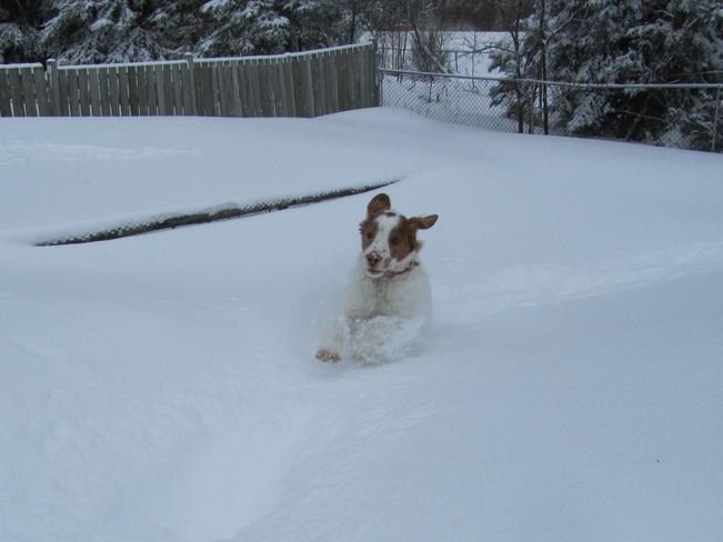 Someone's Enjoying ALL This Snow! Thunder Bay, Ontario Canada